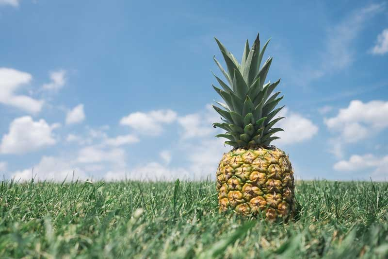 Tablou Ananas