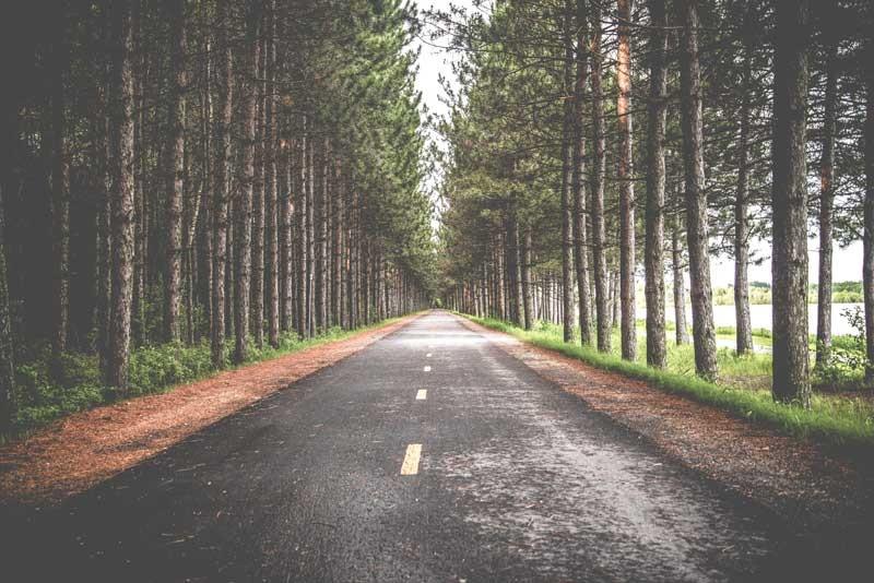 Tablou Sosea prin Padure