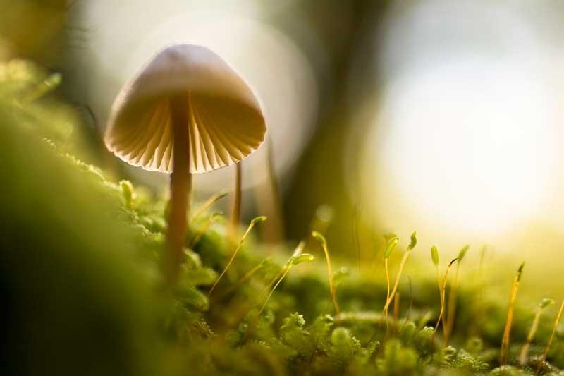 Tablou Ciuperca
