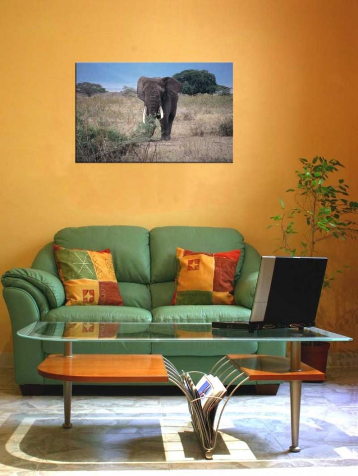 Tablou Elefant