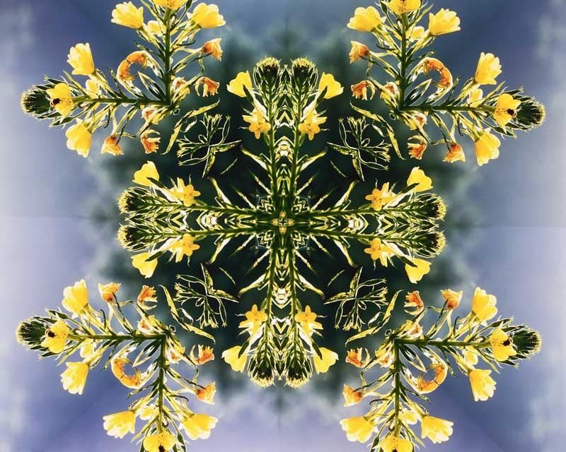 Tablou Floare-Arta
