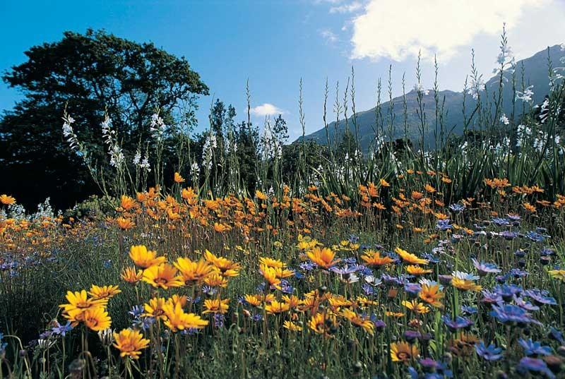 Tablou Flori de camp