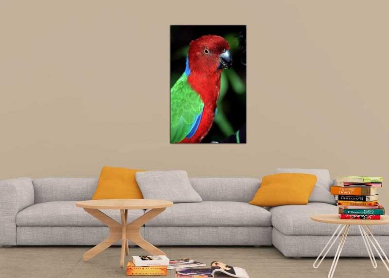 Tablou Papagal
