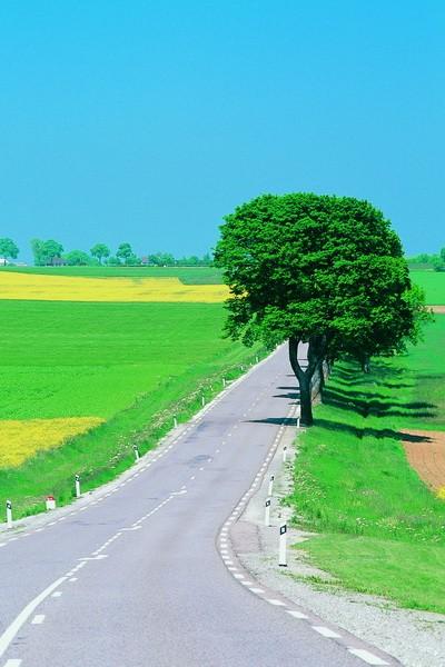 Tablou Drumuri Copac