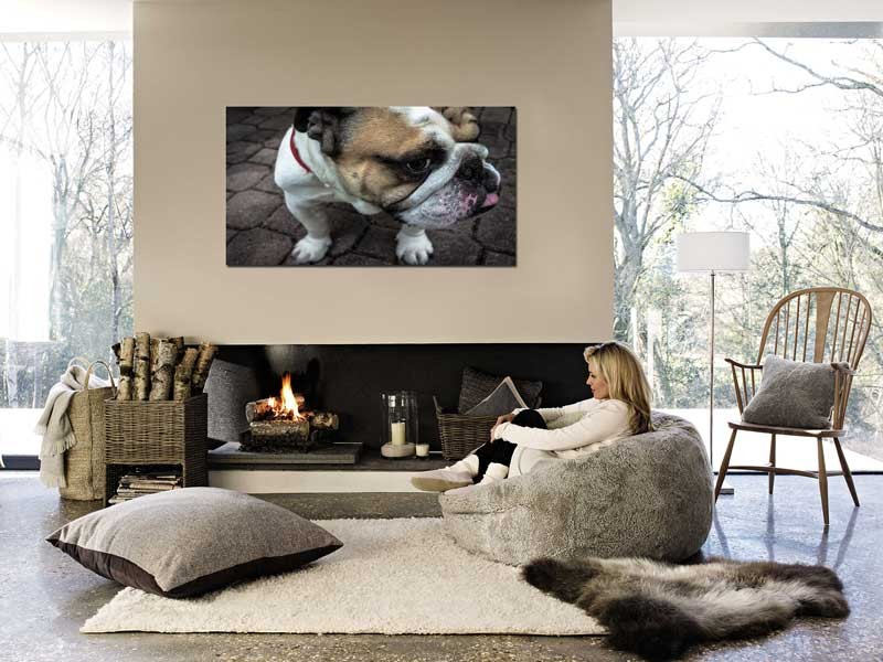 Tablou Bulldog