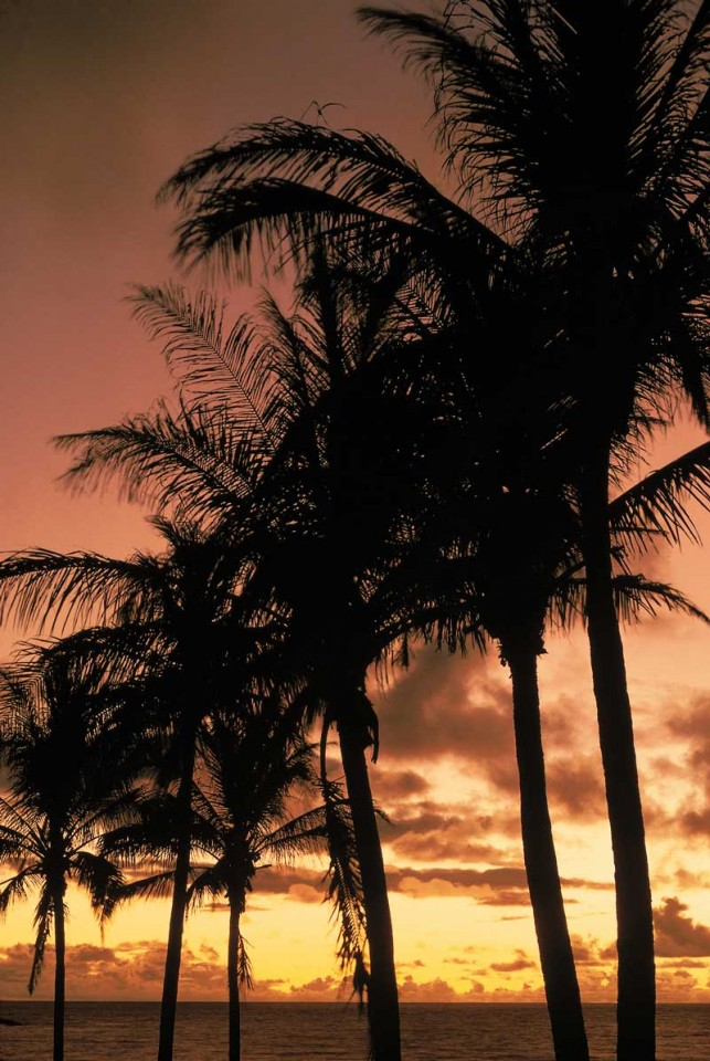 Tablou Palmieri Seara