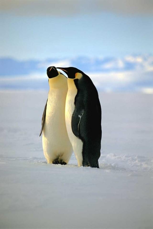 Tablou Pinguini