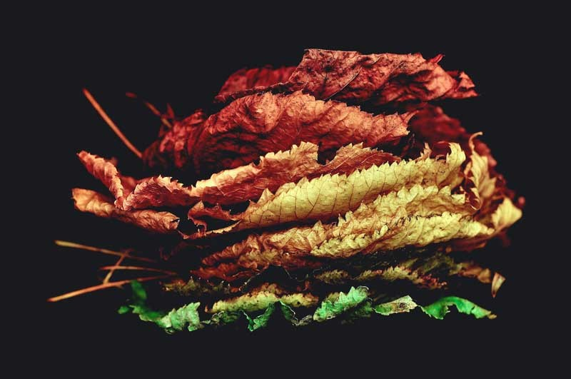 Tablou Frunze Aramii