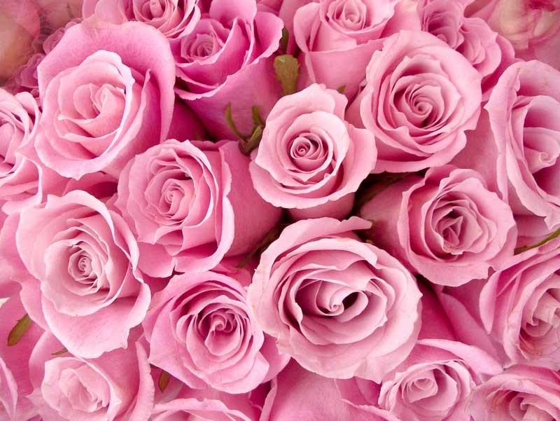Tablou Trandafiri Roz