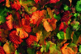 Tablou Multicanvas Frunze