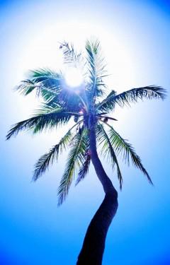 Tablou Palmier