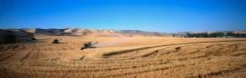 Tablou Multicanvas Agricultura