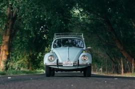 Tablou VW Broscuta