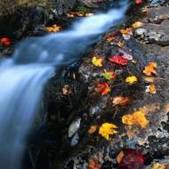 Tablou  Cascada toamna