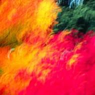 Tablou Culori