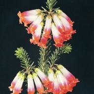 Tablou Floare Detaliu