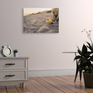 Tablouri animale bobocel pe nisip