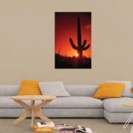 Tablou Cactus in Lumina Apusului