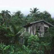 Tablou Casa Parasita
