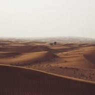 Tablou Copacii din Desert