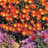 Tablou Floricele