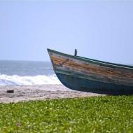 Tablou Barca Parasita