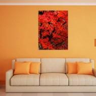 Tablou Frunze rosii