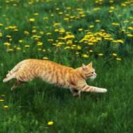 Tablou Pisica pe camp
