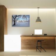Copaci albi - tablouri iarna
