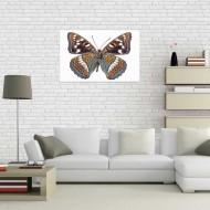 Tablou Fluturas