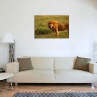 Tablou Leu Furios