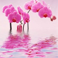 Tablou Orhidee Roz