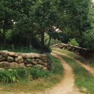 Tablou Drum prin padure