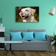 Tablouri animale portret inedit