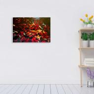 Tablouri underwater - pesti rosii