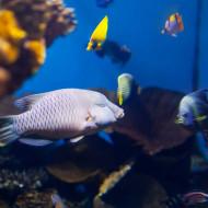 tablouri underwater - pesti