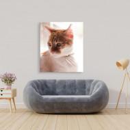 Tablou animale pisica melancolica