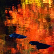 Tablou Culori Aramii
