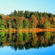Tablou Natura Lac Padure