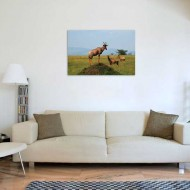 Tablou Antilope