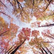 Tablou Copaci Colorati
