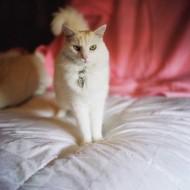 Tablou Pisica