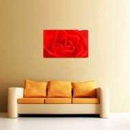 Tablou Trandafir rosu