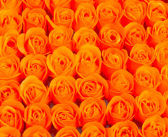 Set 50 trandafiri de sapun, portocaliu