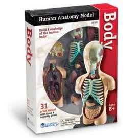 Macheta corpul uman