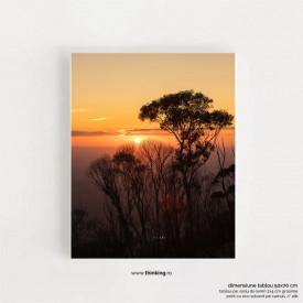 forest sunset landscape