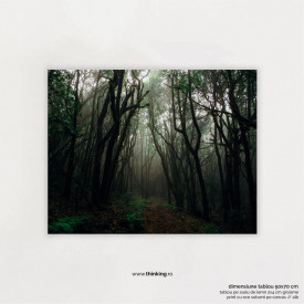 forest with fog landscape