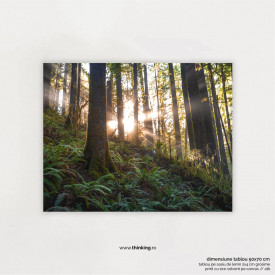 forest with sunlight landscape