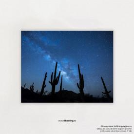 cactus plants under the starry sky landscape