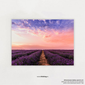 lavender flower field under pink sky
